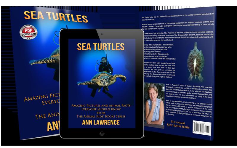 Sea Turtles Pdf Wmc Publishing