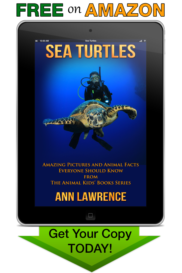 Sea Turtles - Free Kindle Book